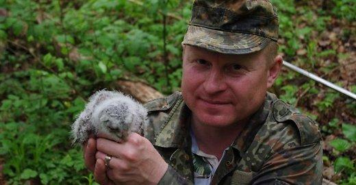 Rankose sužieduotas naminės pelėdos jauniklis