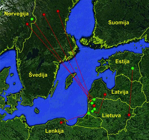 Linijomis sujungtos Lietuvoje žieduotų ir užsienyje aptiktų, bei užsienyje žieduotų ir Lietuvoje aptiktų vandeninių strazdų žiedavimo vietos (raudonos žymės) ir aptikimo vietos (žalios žymės).